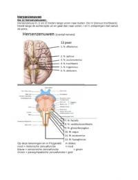LECTURE NOTES: Hoorcollege 2: Hersenzenuwen