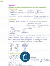 SAMENVATTING: Samenvatting Neurologie (deel 1: cursus neuroanatomie) met tekeningen