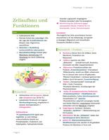 ZUSAMMENFASSUNG: Physiologie der Zelle, Aktionspotential, Synapsen, Muskelaufbau