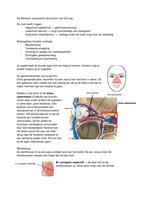 SUMMARY: Oculaire Anatomie de adnexen van het oog