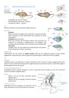 SUMMARY: Samenvatting Biomedische neurowetenschappen 2e bach BMW UHasselt
