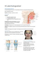 SAMENVATTING: Hoorcollege ademhalingsstelsel