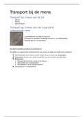 SAMENVATTING: Examengerichte samenvatting bloedsomloop