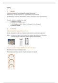 SAMENVATTING: Samenvatting constructies 2