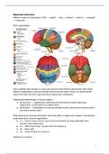 SUMMARY: Summary Neurobiology