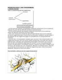 SUMMARY: Hoorcollege 3: het ruggenmerg